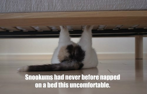 Snookums had never before napped on a bed this uncomfortable.