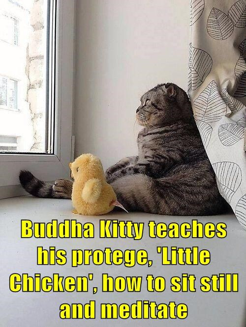 Buddha Kitty teaches his protege, 'Little Chicken', how to sit still and meditate