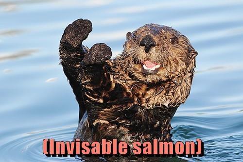 (Invisable salmon)