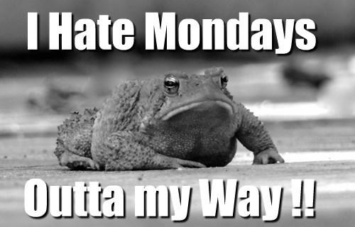 Anti-Monday Toad