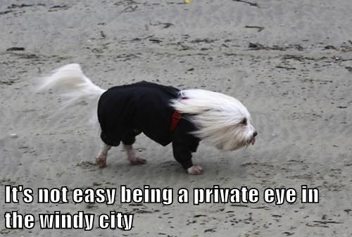 It's not easy being a private eye in the windy city