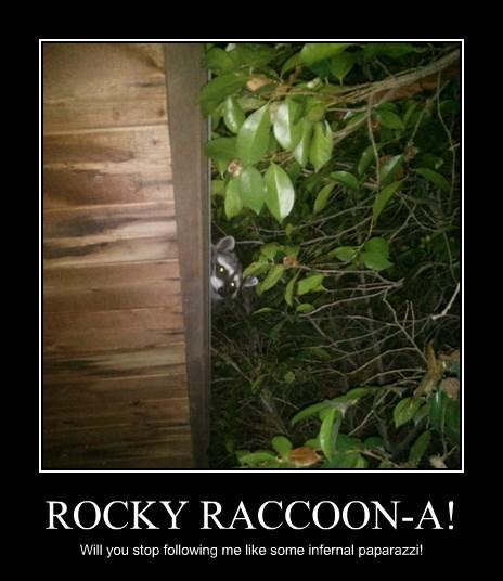 ROCKY RACCOON-A!