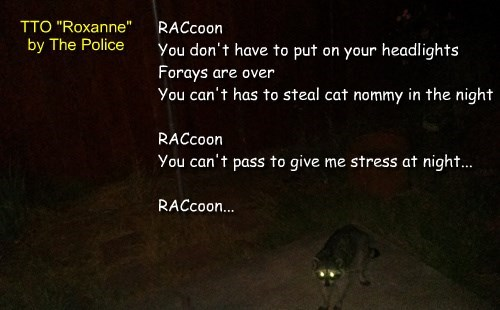 """Raccoon"" (TTO ""Roxanne"" by The Police)"