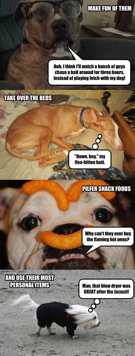 What Dogs Really Do When Their People Aren't Home