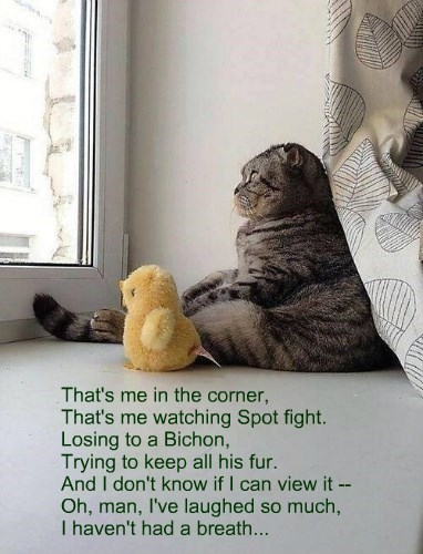 If Cats Wrote Pop Songs