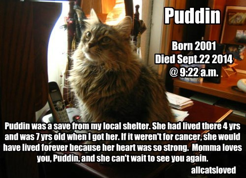 Puddin goes to the Rainbow Bridge Sept 22 2014