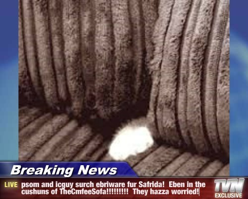 Breaking News - psom and icguy surch ebriware fur Safrida!  Eben in the cushuns of TheCmfeeSofa!!!!!!!!!  They hazza worried!