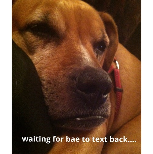 dogs,waiting,text