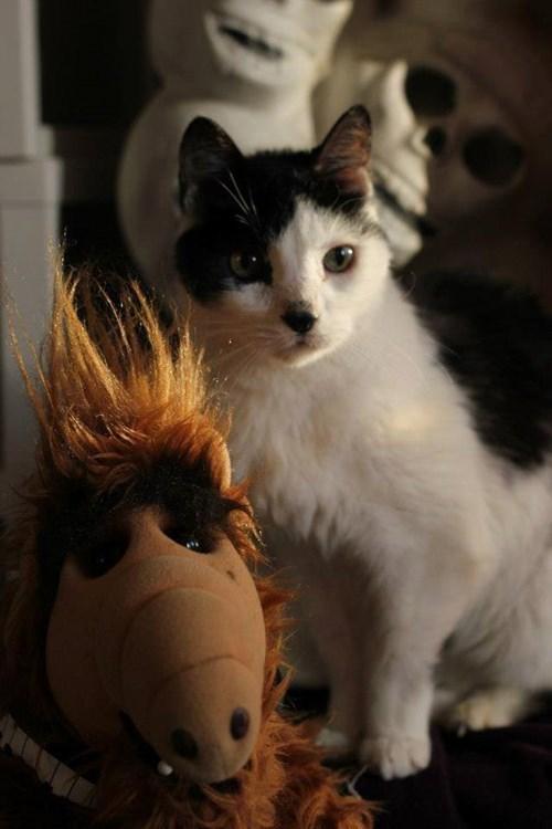 Mr. Fish meets Alf.