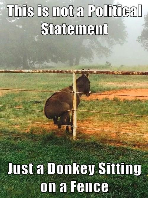 This is not a Political Statement  Just a Donkey Sitting on a Fence