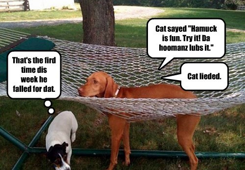 Cats,dogs,trickery