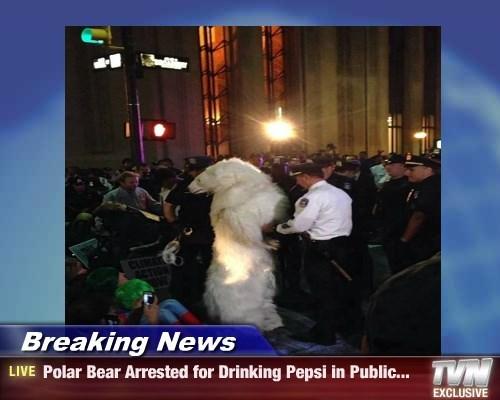 Breaking News - Polar Bear Arrested for Drinking Pepsi in Public...