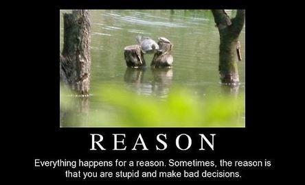 Makes More Sense Than Fate