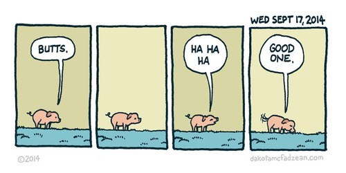 Pigs Are Great Comedians