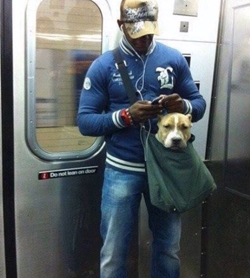 "New York Has Banned Pets From Their Subways... Unless They Can Fit into ""Small"" Bags"