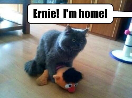 Bert's Surprise