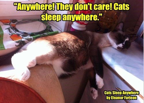 """""""Anywhere! They don't care! Cats sleep anywhere."""""""