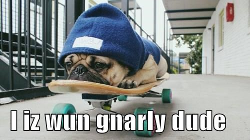 I iz wun gnarly dude
