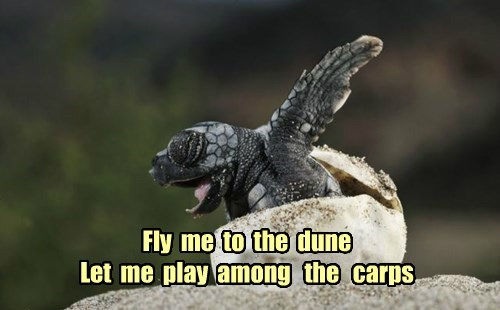Fly  me  to  the  dune Let  me  play  among   the   carps