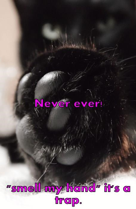 """Never ever! """"smell my hand"""" it's a trap."""