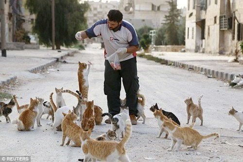 The cat man of Aleppo: As civil war rages around him, ambulance driver spends his savings on feeding orphaned pets