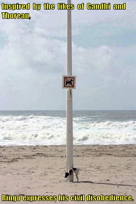 Civil Disobedience at its Finest