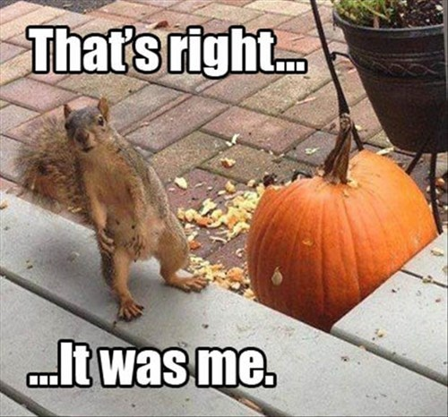 fall,halloween,pumpkins,squirrel
