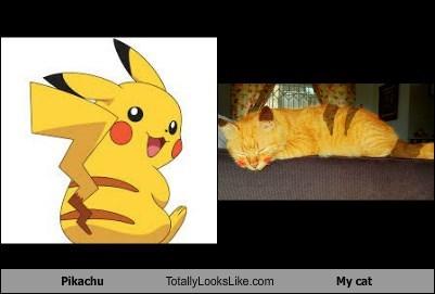 Pikachu Totally Looks Like My cat
