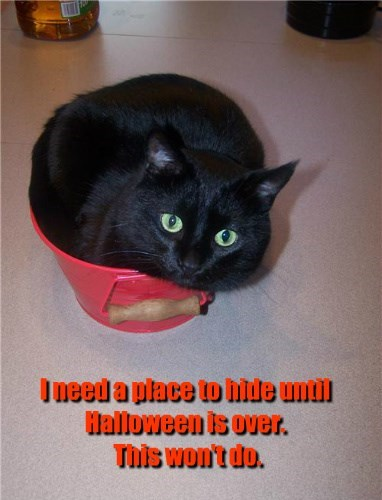 I need a place to hide until Halloween is over.   This won't do.