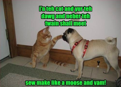 Cats,dogs,pug,tabby
