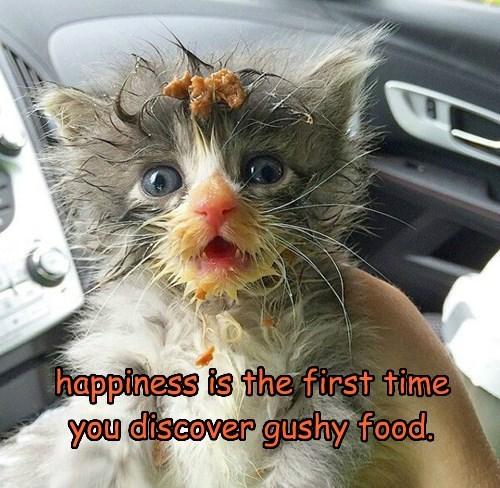 happiness is the first time you discover gushy food.