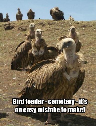 Bird feeder - cemetery - it's an easy mistake to make!