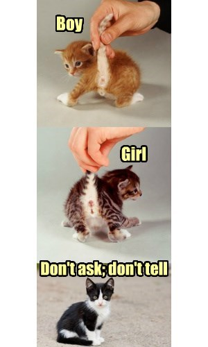 Kittens demand gender neutrality!