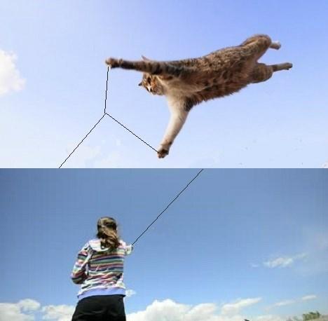 Kite Kat