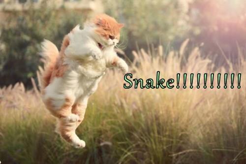 Snake!!!!!!!!!!