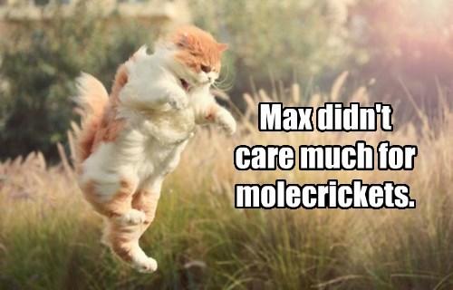 Max didn't care much for molecrickets.