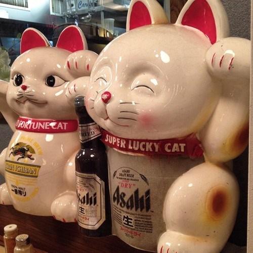 beer,Cats,asahi,funny