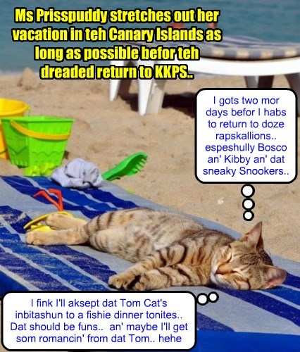 Ms Prisspuddy enjoys teh ocean breeezes on her vacation..
