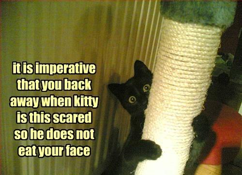 Cat Behavior 101