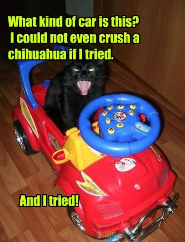 What kind of car is this?  I could not even crush a chihuahua if I tried.               And I tried!