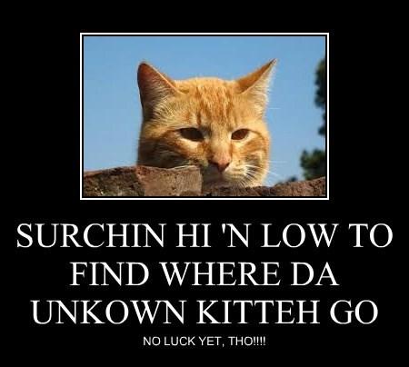 SURCHIN HI 'N LOW TO FIND WHERE DA UNKOWN KITTEH GO