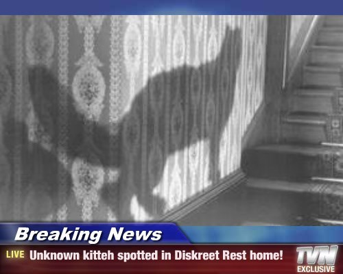 Breaking News - Unknown kitteh spotted in Diskreet Rest home!
