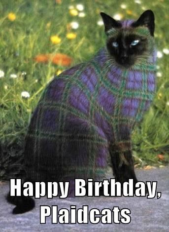 Happy Birthday, Plaidcats