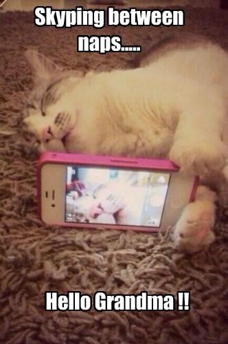 skype,selfie,Cats,iphone