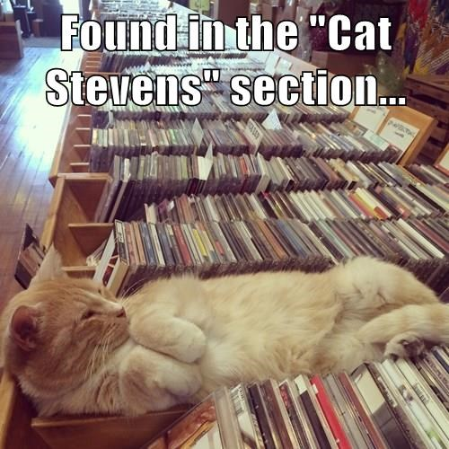 "Found in the ""Cat Stevens"" section..."
