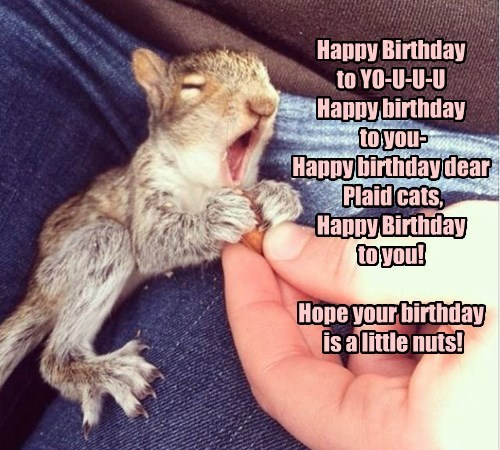 Happy Birthday  to YO-U-U-U Happy birthday  to you- Happy birthday dear  Plaid cats, Happy Birthday  to you!  Hope your birthday  is a little nuts!
