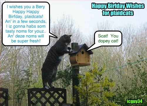 A most Happy Birthday for plaidcats!  Saves som icyscreams for me an' I'll be dare in a jiff!
