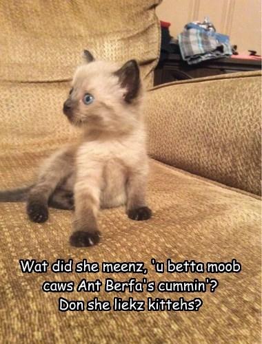 Wat did she meenz, 'u betta moob caws Ant Berfa's cummin'?   Don she liekz kittehs?