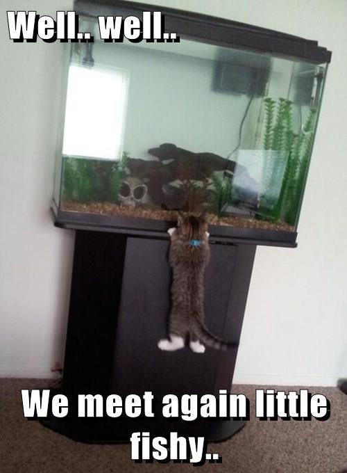Well.. well..  We meet again little fishy..