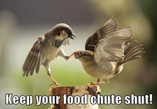 Keep your food chute shut!